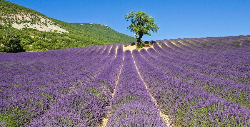 Provence: Mooie fietsroutes door de lavendel