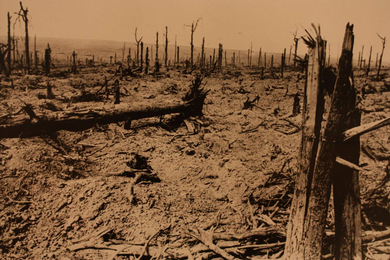 Zo zag het bos er na de strijd uit.