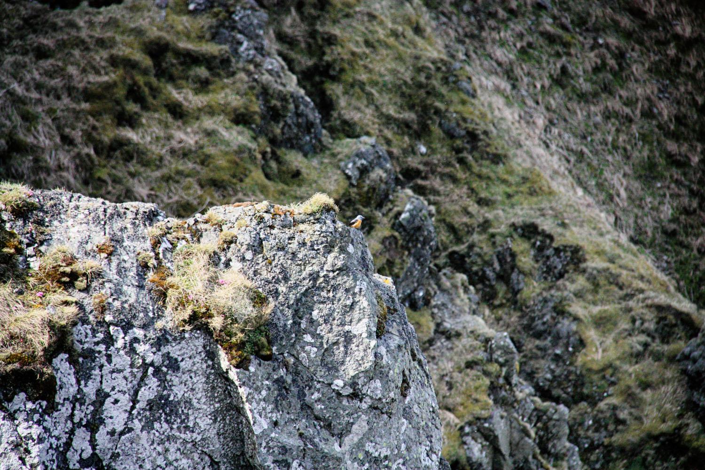 De rode rotslijster laat zich over het algemeen niet graag fotograferen, maar vandaag zet hij zijn beste beentje voor.
