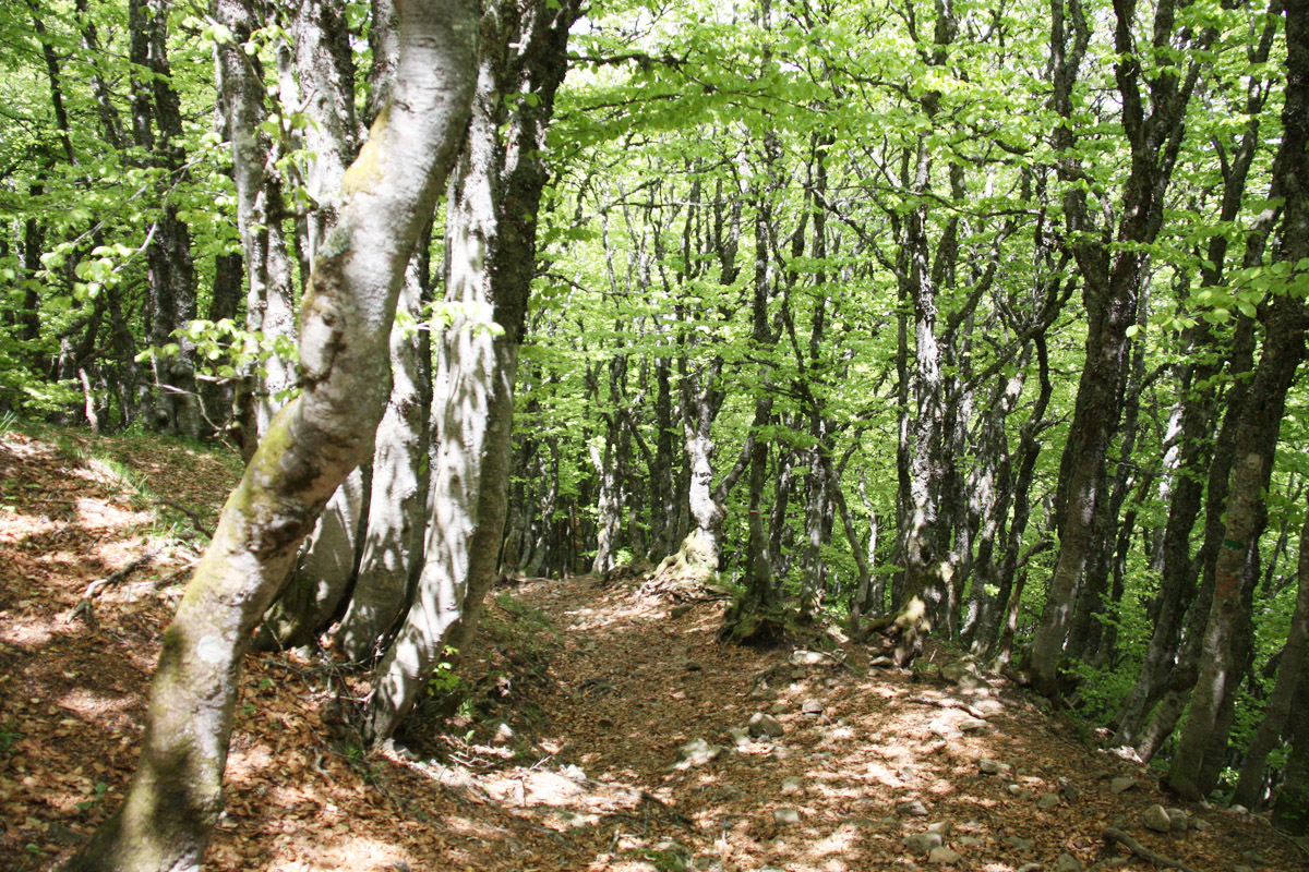Het eerste gedeelte van de wandeltocht voert door een mooi berkenbos.