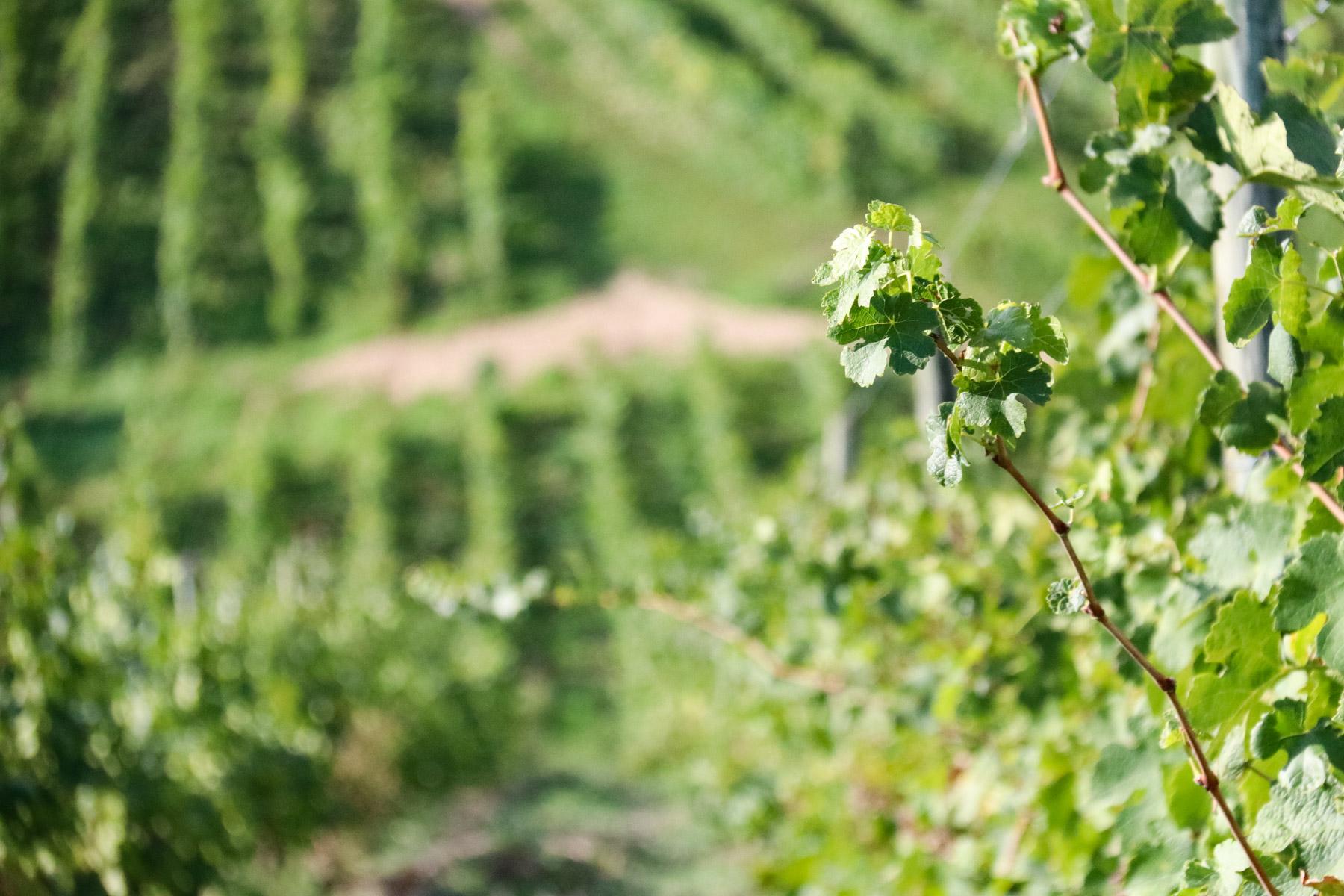 Twee Onbekende Wijnstreken In Frankrijk Tips Voor Je Vakantie In