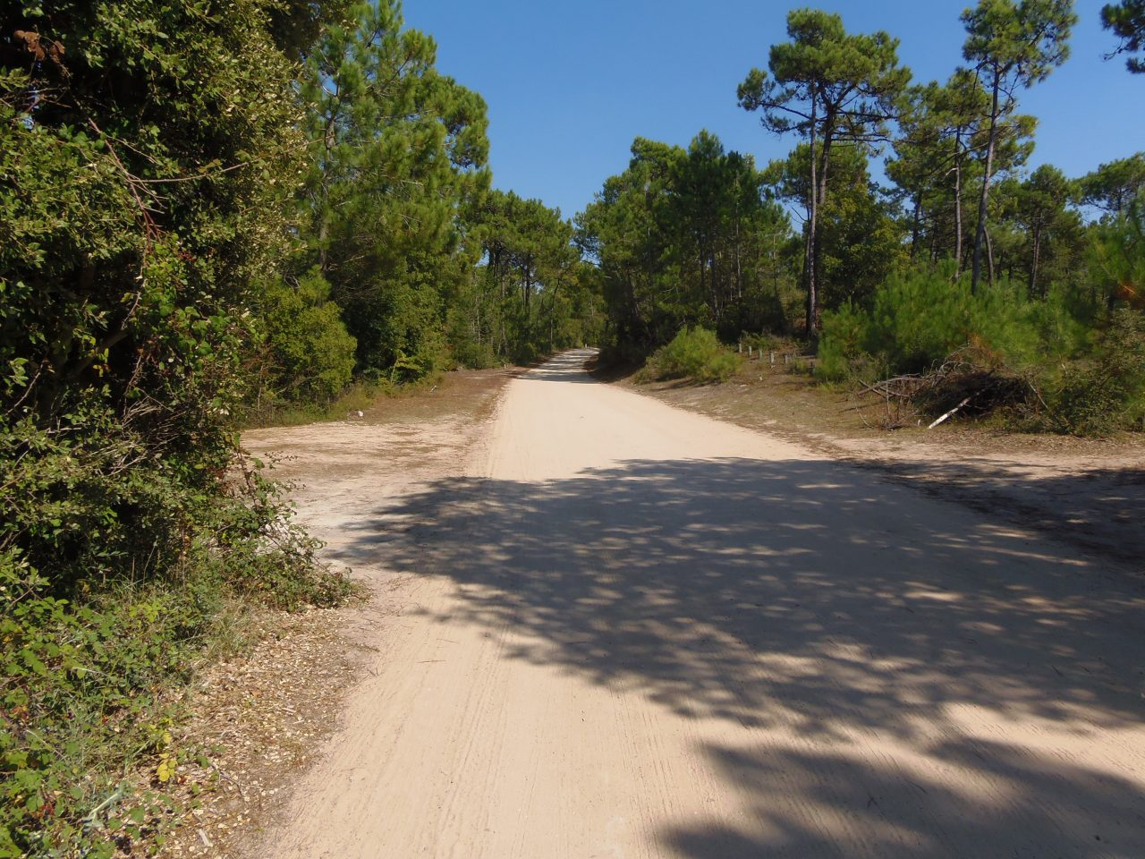passage-du-gois-fietsen-bossen-kust-vendee